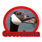 Happy Daily 145 – Gooselanta